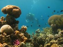 Mergulho no Mar Vermelho