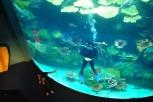 """""""E isto se chama 'mergulhador'..."""" (Aquário Paragon - Bangkok)"""