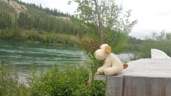 """""""MeditaCÂO no Rio Yukon..."""
