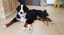 Luna e seu novo amigo, Parmesolino