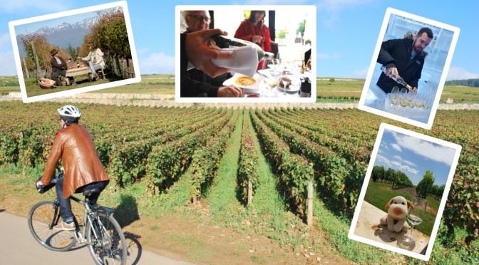 Cinco vinícolas pelo mundo